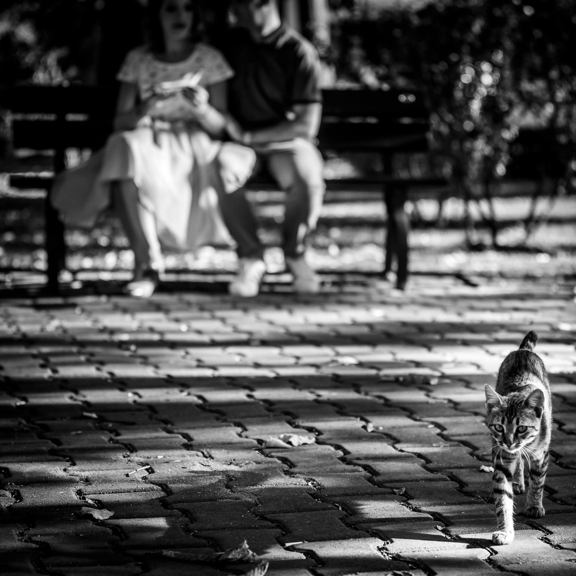 Sedinta foto Dorobanti / Strada Paris - Mihai Zaharia Photography - 07